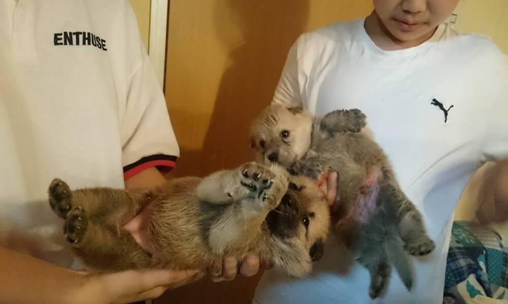 animal_case_worker_08